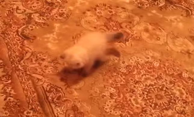 カーペットの上に子猫。