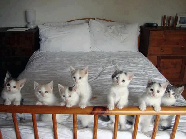 子猫軍団参上。