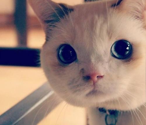 おとぼけフェイスな猫。