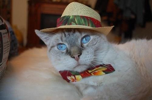 オシャレバカンスな猫