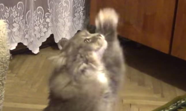 魅惑の猫ダンス♪
