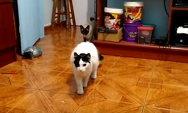 猫が2匹に!