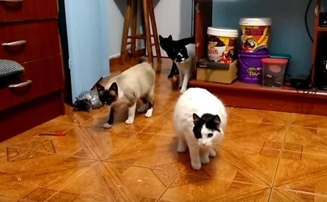 猫が4匹に!!
