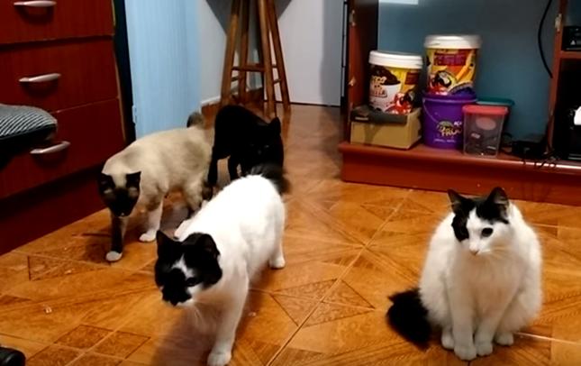 音に合わせてカクカク動く猫達!
