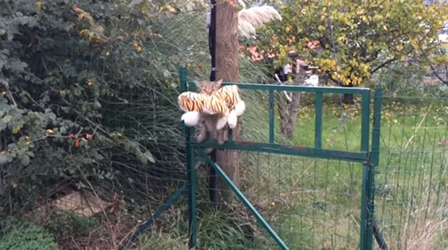 颯爽と現れる泥棒猫。