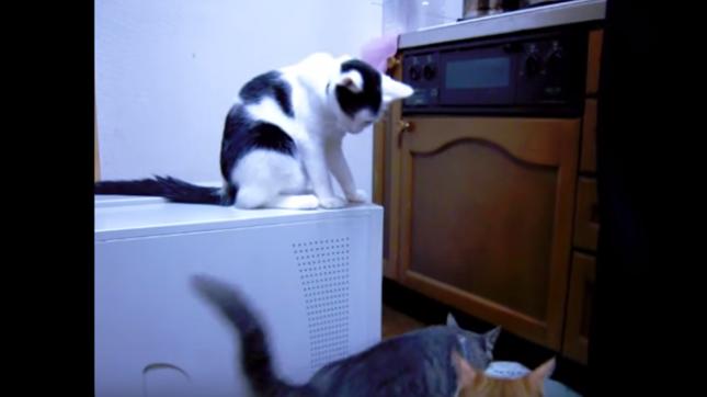 何かを企む白黒猫。
