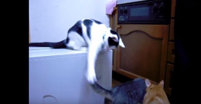 尻尾に猫パンチ!