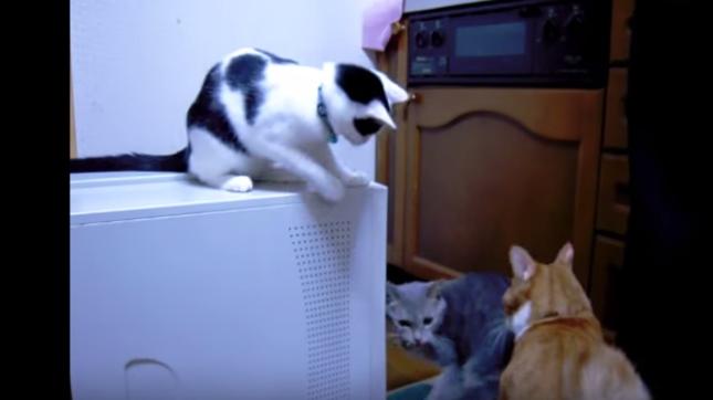 犯人を勘違いする猫。