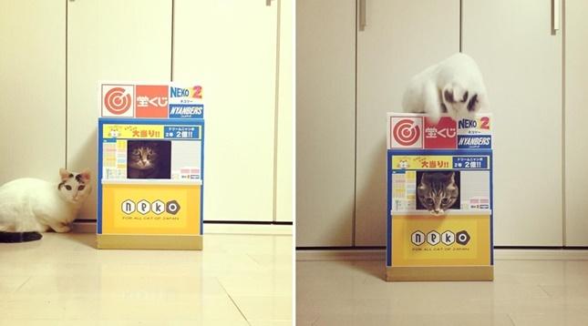 猫強盗事件。