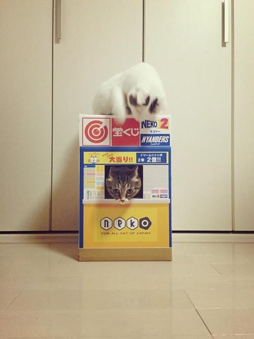 店員猫さんあぶない!!