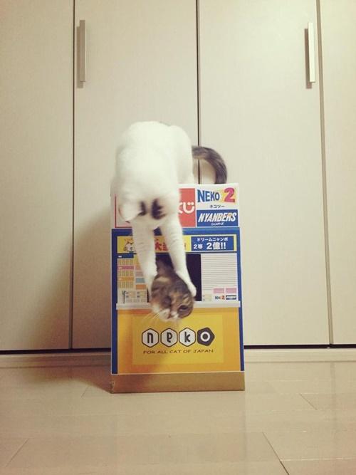容赦ない強盗猫の攻撃!