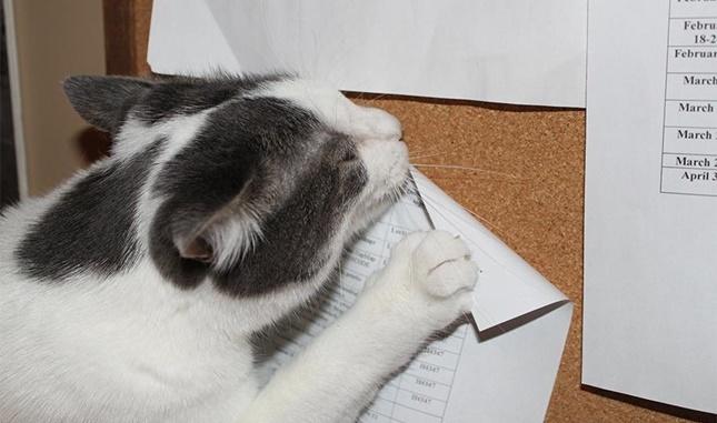画鋲をはずす猫。