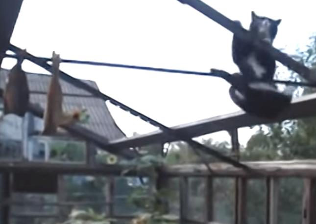 綱渡りに悪戦苦闘する猫。