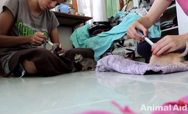 5匹もの子猫が排気口にいました。