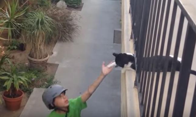 猫パンチでハイタッチ!!!