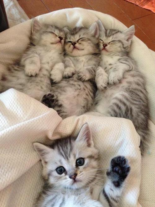 グッスリ子猫&夜更かし子猫。