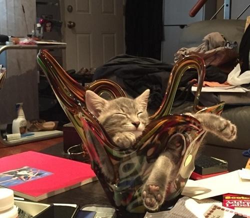 セレブ猫。