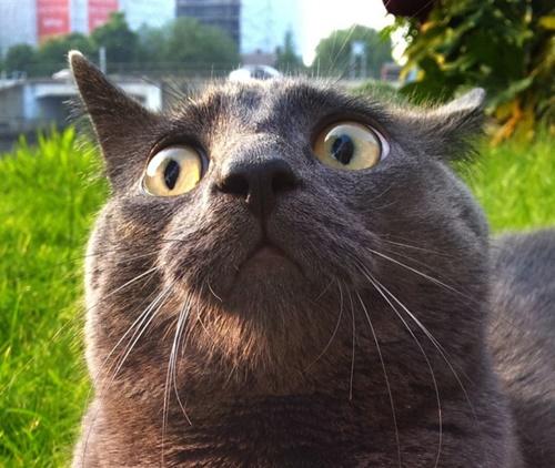 何かにビックリしてる猫。