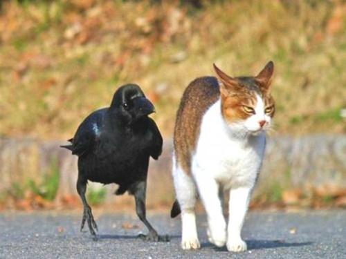 猫と仲良しなカラス。