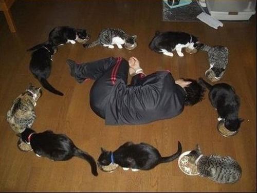 猫包囲網。