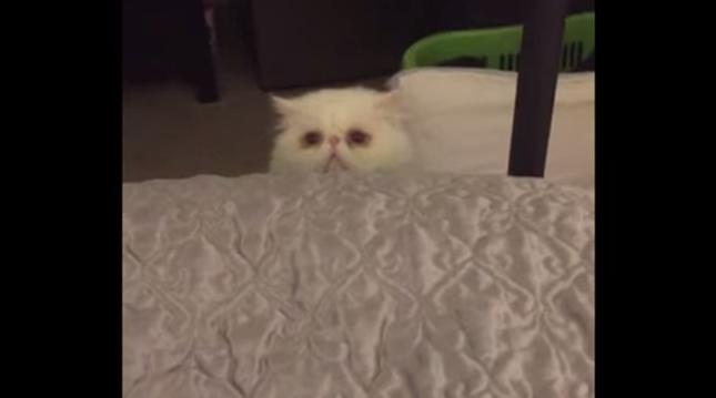 そして恐る恐る監視する猫。