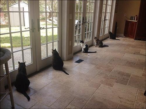 等間隔な猫達。