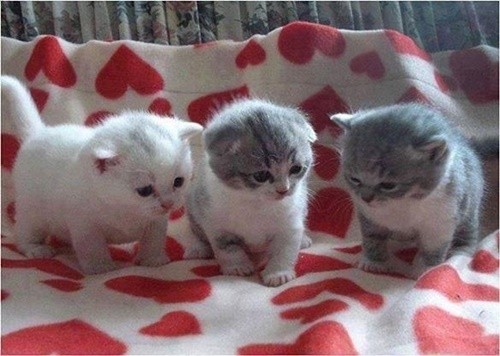子猫たちの集会!