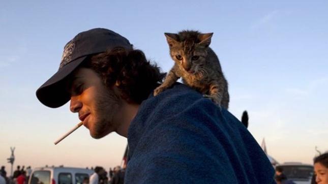 シリア難民の男性と子猫。