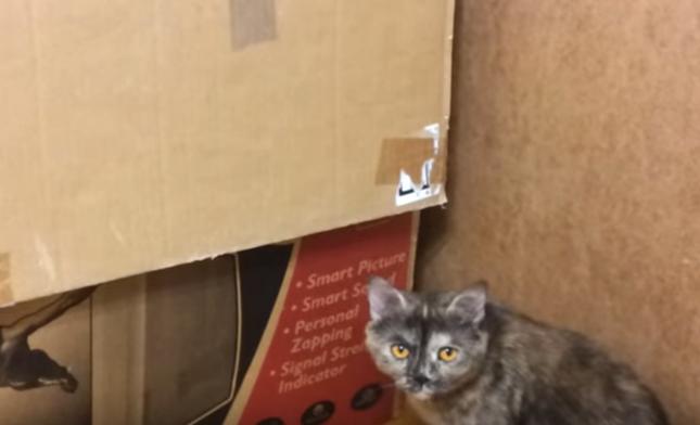 心配そうな母猫。