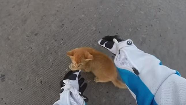 なんとか子猫を救い上げます。