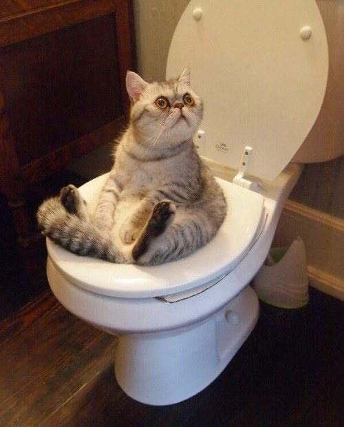 なんか惜しい猫。
