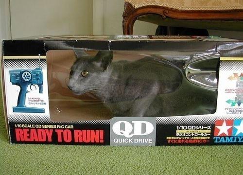 ラジコン猫!??