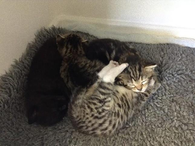保護された4匹の子猫。