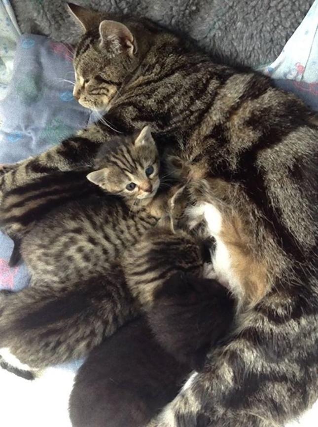 母猫に甘える子猫達。