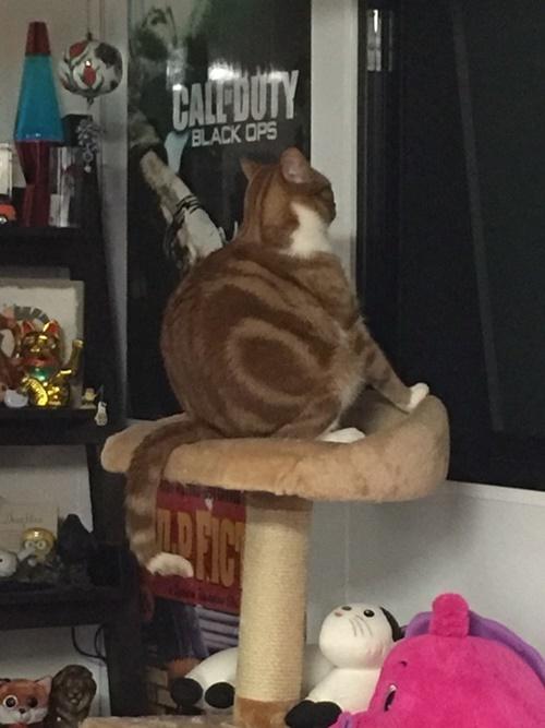 最高に綺麗な猫背。