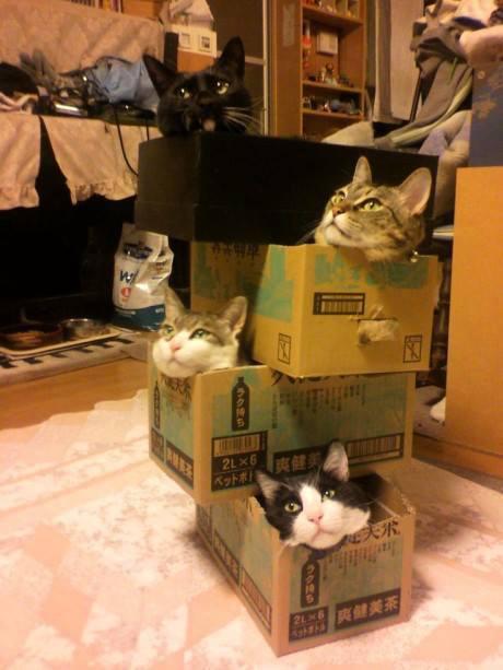 満員御礼猫ハウス。