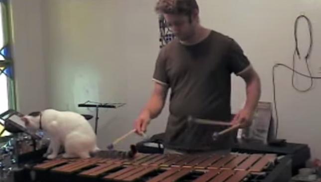 木琴に飛び乗る猫。