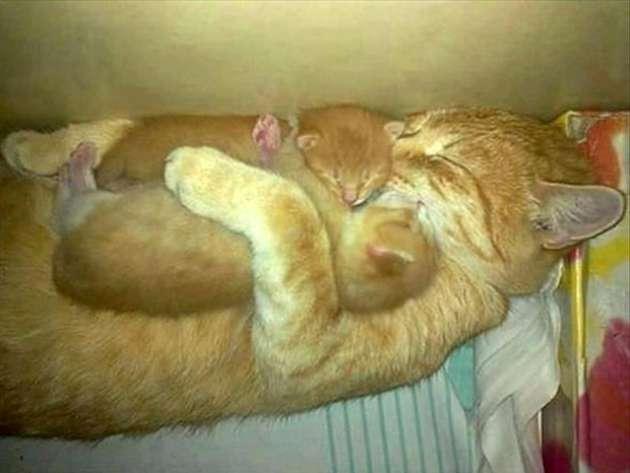 子猫たちを抱きしめる母猫。
