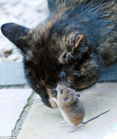 本来敵である猫とねずみ。