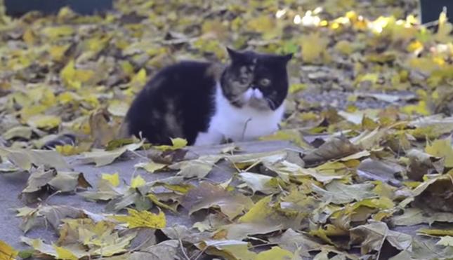 落ち葉狩りが楽しそう!