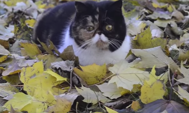 秋を満喫♪