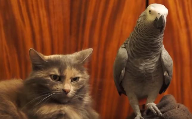 猫とオウム。