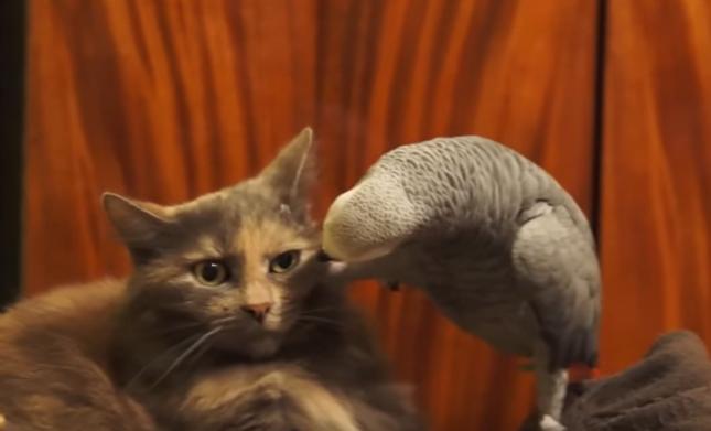 猫を攻撃するオウム。