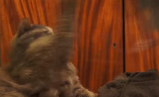 これはさすがに猫パンチ。