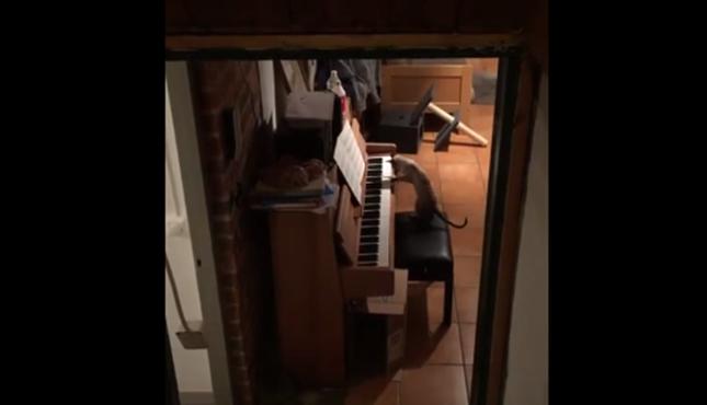 猫がピアノの練習!