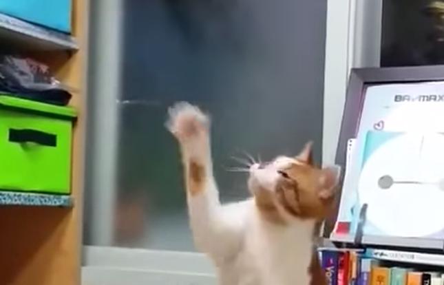 最初は猫パンチだったのが・・・