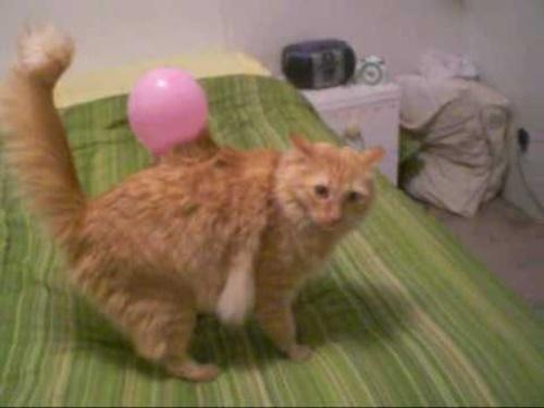 猫から風船が産まれた。