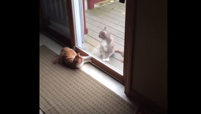 2匹の猫。