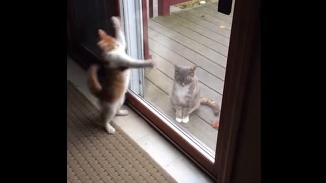 家猫は何とかして気を引きたい。