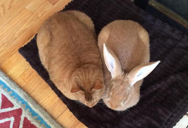 ソックリな猫とウサギ。